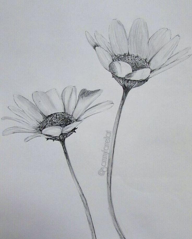 "Recent  ""#draw #drawing #sketch #sketching #art #arty #artwork #flower #flowers #daisy #blackandwhite #pencil #pencildrawing #detail #fineliner #pen #black #realistic #realism #artfeature #artisticfeed #global_artist #artshare"""