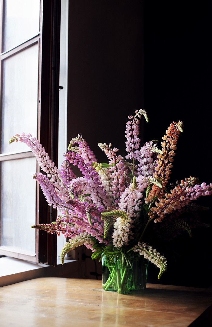 Summer traditions: pink lupins. http://obus.com.au
