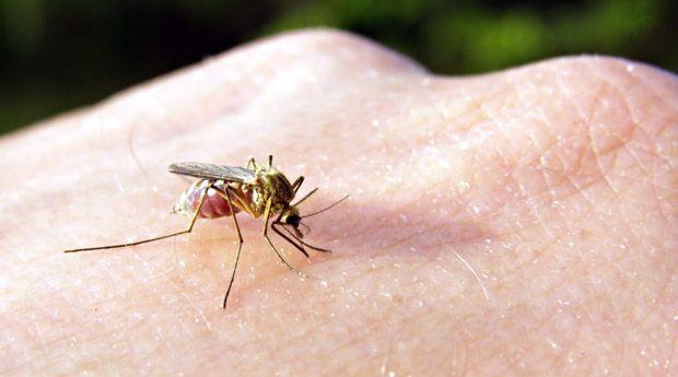 Укусы насекомых: 9 домашних средств для снятия зуда - Все мы любим лето, но ровно до тех пор, пока на нашу кожу не совершат нападение насекомые. Ни один репеллент не гарантирует вам 100% защиты от них, но, когда в следующий раз вы обнаружите на коже зудящий покрасневши
