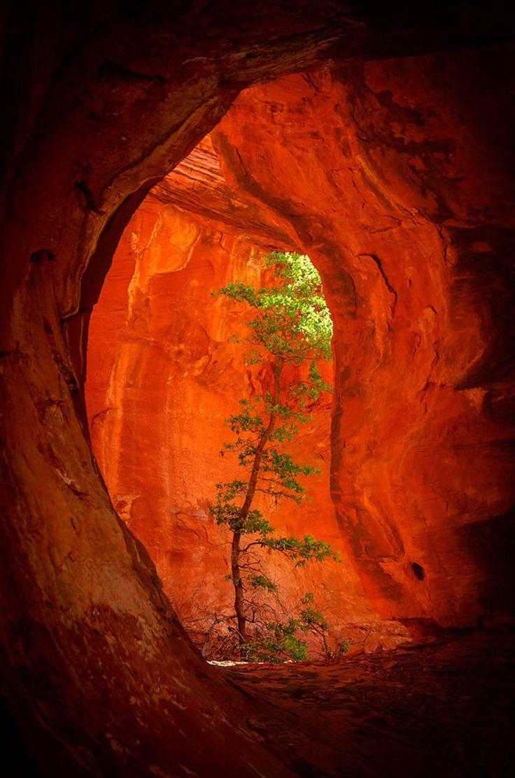 Boynton Canyon: Sedona, AZ