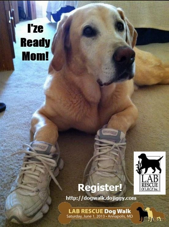 Join us for the Lab Rescue Walk in Annapolis June 1st! #labs