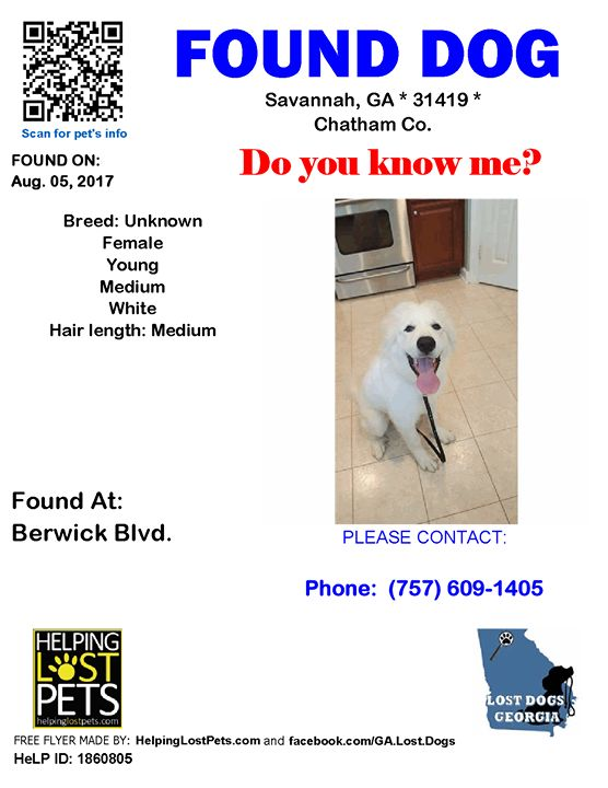 Found Dog - Savannah GA - Aug.05 2017 Closest Intersection: Highway 17 County: Chatham  Do you know this Dog? #Savannah (Highway 17) #GA 31419 #Chatham Co.  #Dog 08-05-2017! Gender: Unknown #Unknown White/  CONTACT shamonwhi32@yahoo.com  More Info Photos and to Contact: http://ift.tt/2ugNHmV  To see this pets location on the HelpingLostPets Map: http://ift.tt/2vF62gP  Let's get this dog home! #lostdogsgeorgia #HelpingLostPets