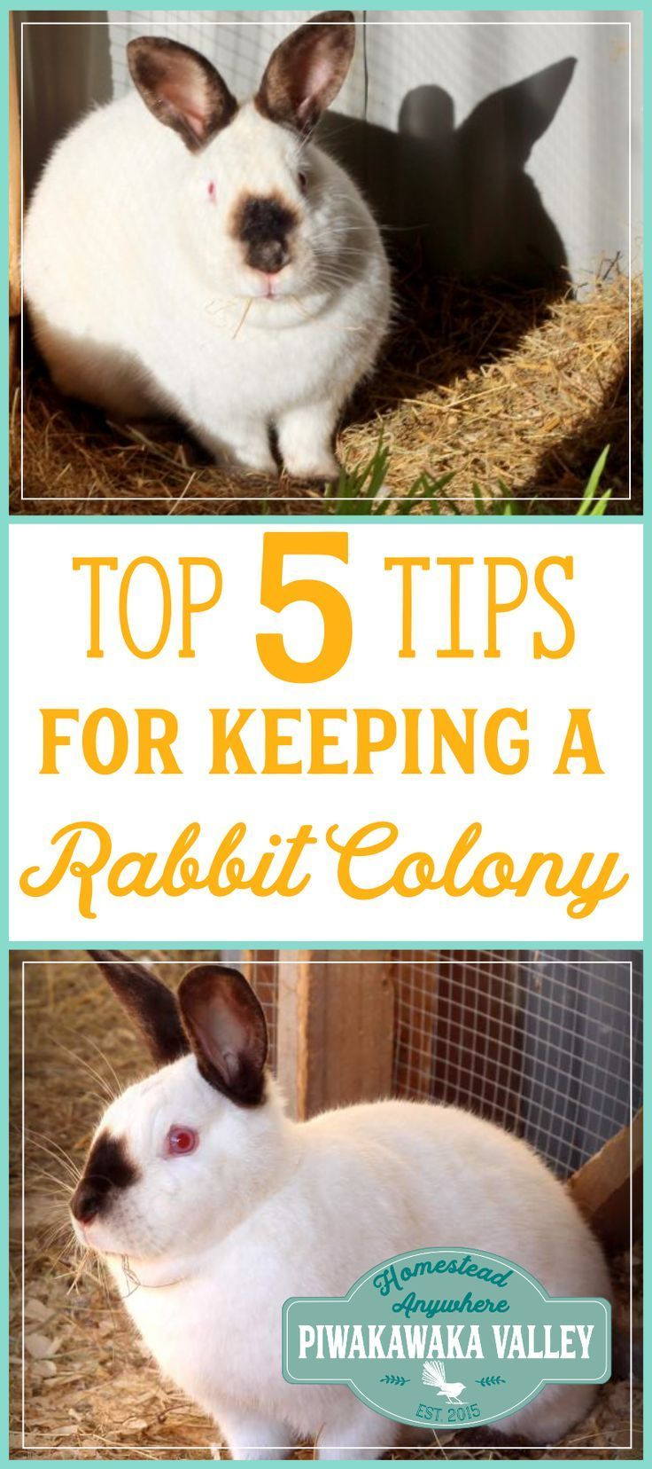 139 best rabbits images on pinterest raising rabbits meat