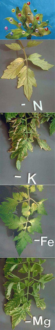 Чего не хватает растениям? Памятка. | Для дачников.ру