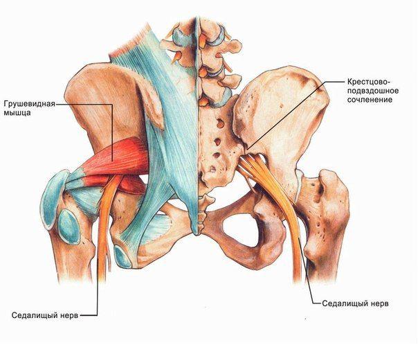 КАК УСТРАНИТЬ БОЛЬ В НОГЕ ОТ ВОСПАЛЕНИЯ СЕДАЛИЩНОГО НЕРВА .... Седалищный нерв – самый длинный и объемный нерв в теле человека. Самое распространенное заболевание – Ишиас, или воспаление седалищного нерва.Этот нерв начинается в поясничном отделе позвоночника, пр…