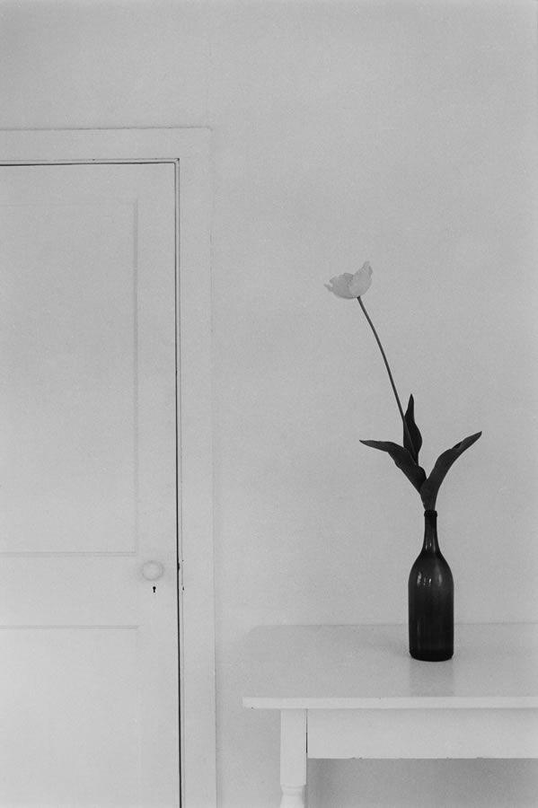 Tulip 1982