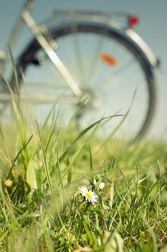 Summer days, wild flowers & bicycles.