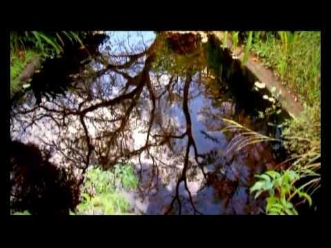 Madeira Island Natural Diversity