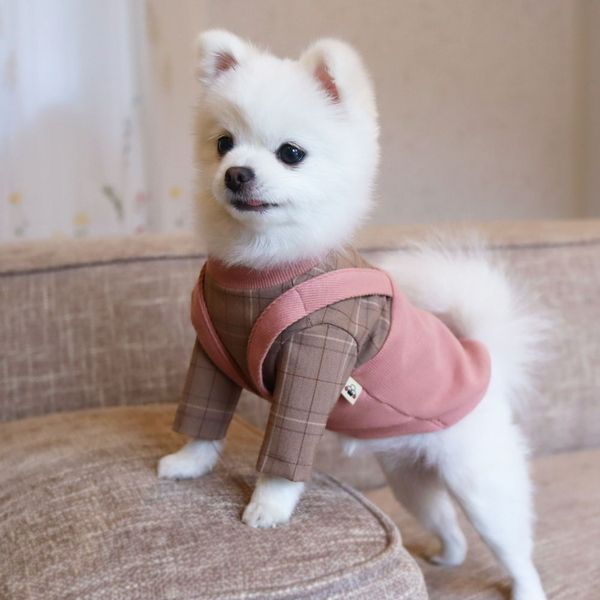 Joan In Her Punch Vest Boston Terrier Love Boston Terrier Terrier