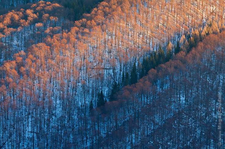 MAGDA CHUDZIK (Poland) - Forest in Bieszczady National Park at sunrise
