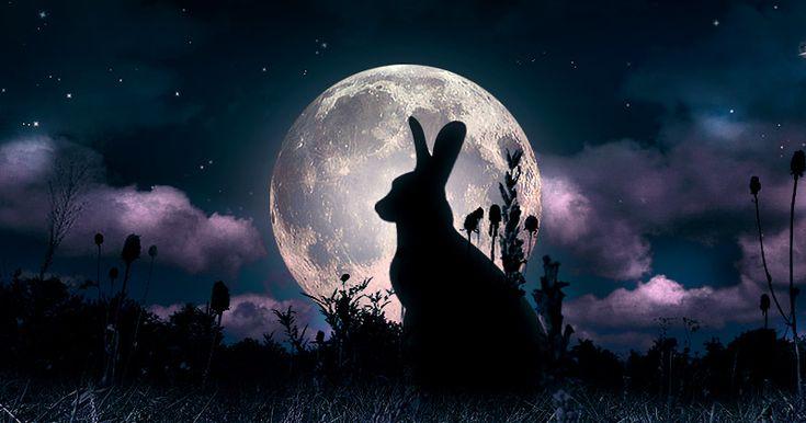 La lepre sulla Luna