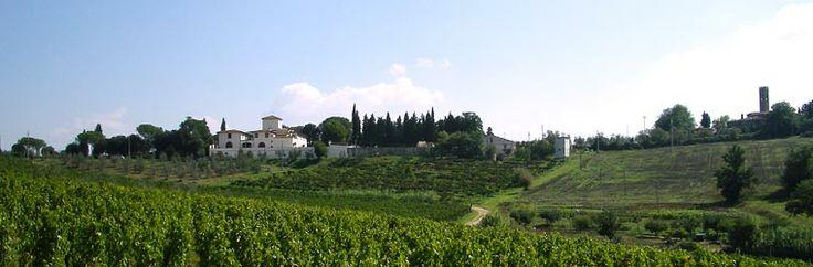 Fattoria San Michele a Torri, #Laudemio producer in Scandicci, Florence, #Tuscany