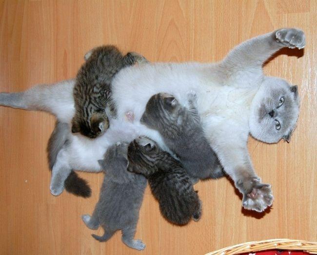 20 фото счастливых мамочек-кошек с очаровательными ...