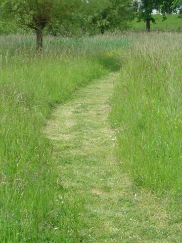 Serpentine path through the meadow. A soft, natural carpet.Uhm, maybe, I don't have to mow for the season?