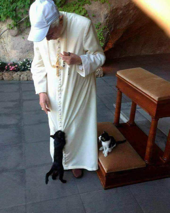 "Daily Catholic Teen™ (@daily_catholic_teen) on Instagram: ""Recent picture of Pope Benedict XVI playing with the cats at the Vatican gardens"""