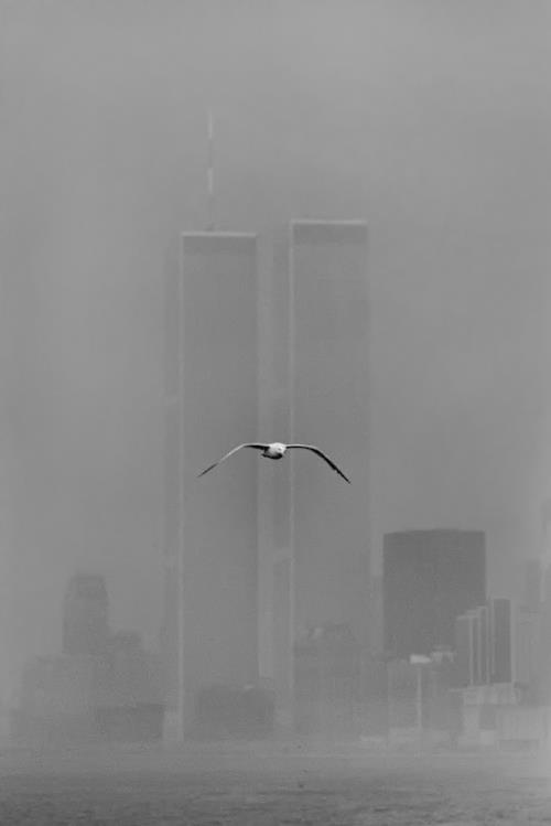 Louis Stettner - World Trade Center, New York, 1979...it would be nice if this bird had been a Dove of Peace and the buildings and people were still standing...