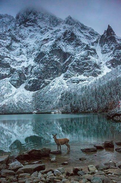Les Tatras, massif faisant la frontière naturelle entre la Pologne et la Slovaquie, nature sauvage et préservée ... http://www.grandangle.fr/circuit/18490_cracovie_et_les_carpates