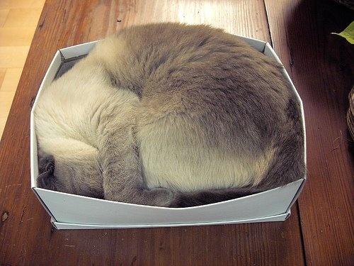 25 TL'lik hediye çekini duyan evin uykucusu Üzüm, sizin için en güzel uykumu bu kutuda uyurum demiş!   Siz de en yakın dostunuzun bir kutu içinde çekilmiş fotoğrafını mailto: sosyalmedya@altincicadde.com'a gönderin, 25 TL değerinde hediye çekinin sahibi olma şansını yakalayın!
