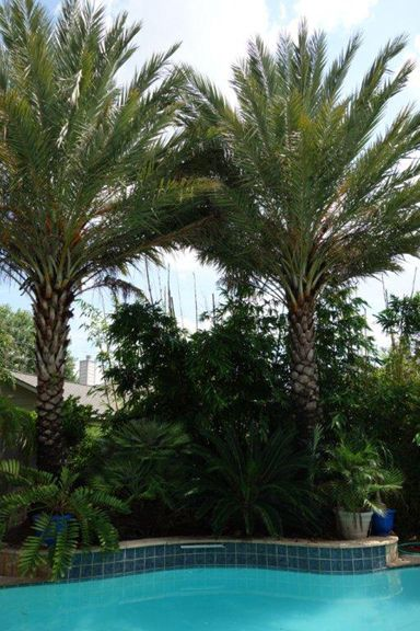 19 Best Images About Arizona On Pinterest Coyotes