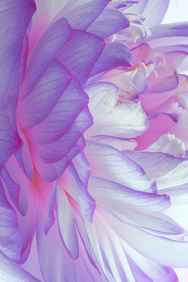 Desert Dreamer- Not sure if this is a real flower or painting..... Either way it is so cool!!!!,