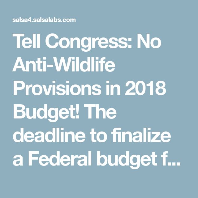 Tell Congress: No Anti-Wildlife Provisions in 2018 Budget! The deadline to finalize a Federal budget for Fiscal Year 2018 is fast approaching, and, as they have attempted to do every year, anti-wildlife, anti-Endangered Species Act (ESA) lawmakers have loaded up FY2018 budget bills with legislative riders that remove federal protections from some of our most imperiled endangered species and attack the ESA. Write to your U.S. senators and representative and urge them to stand firm against all…