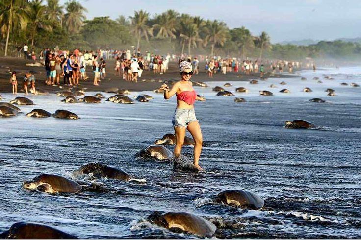 Cientos de turistas impiden a tortugas marinas desovar en una reserva natural de Costa Rica                                                                                                                                                                                 Más