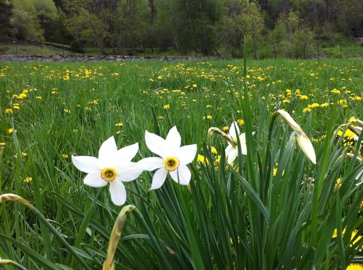 Ordino (Andorra)- Spring