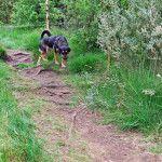 Fanø hundeskov - the forrest for dogs