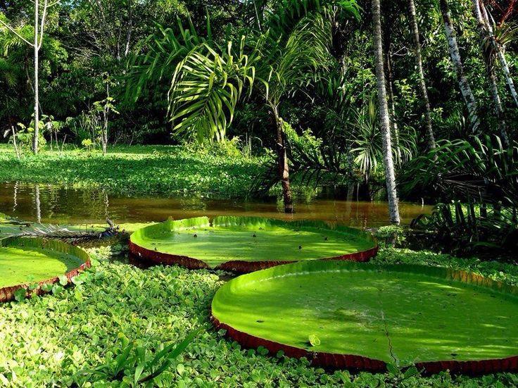 Амазонские тропические леса, Южная Америка  #travel #travelgidclub #путешествия #traveling #traveler #beautiful #instatravel #tourism #tourist #туризм #природа #Южная #Америка #Амазонка #тропики #джунгли
