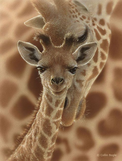 Giraffe Calf ~ With His Mom ... Sadly, they are highly endangered and headed for extinction in the wild ...