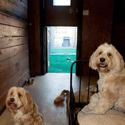 Cotati Dog Boarding Petaluma