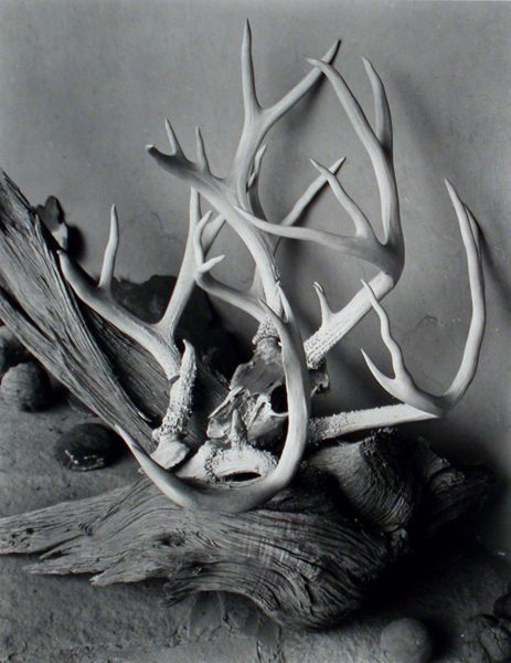 Antlers, O'Keeffe's Portal, Ghost Ranch, New Mexico, 1945. Gelatin silver print, photo by Eliot Porter