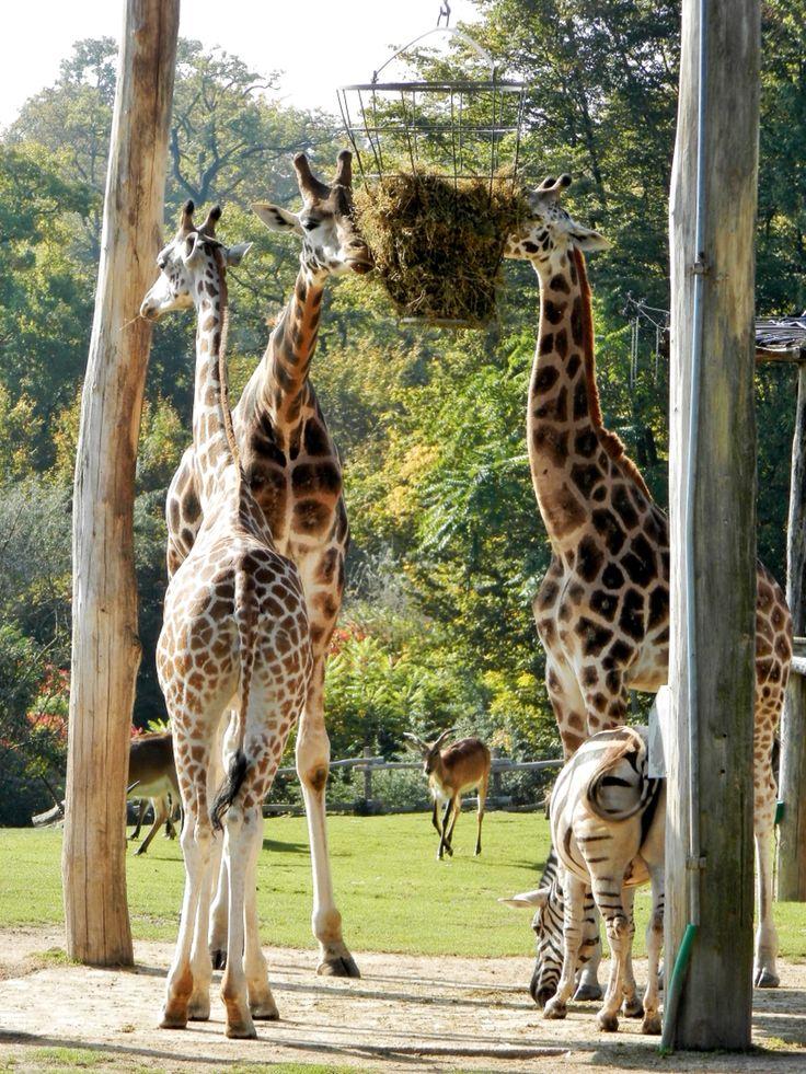 Zoo amneville éblouissant...
