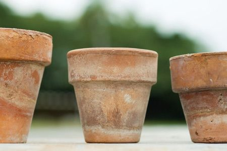 Rustic looking terra cotta planting pots - Cut to the chase and make your new terra cotta pots look like they've been weathering in the garden for decades. Chalky lime turns any pristine pot into a relic.