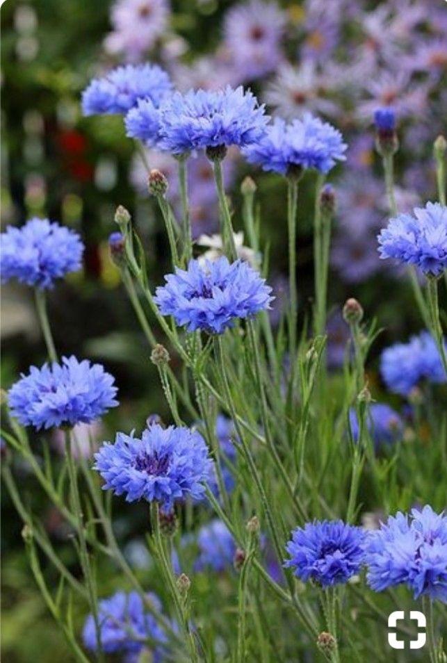 Pin By Garden Girl On Fiori Purple Flowers Trendy Flowers Flower Garden
