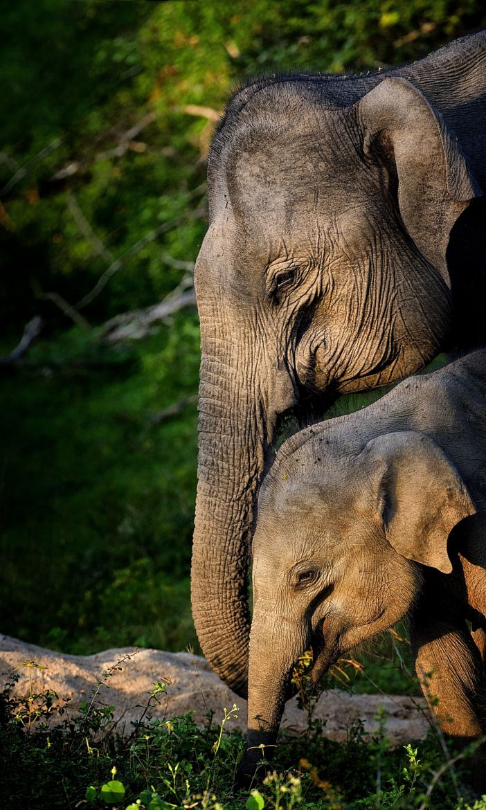 319 best Elephant and Baby Love images on Pinterest - photo#31