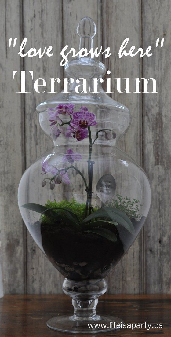 Terrarium: How to make a beautiful terrarium in an apothecary jar, including how to use fish tank charcoal to create the perfect micro-climate that won't go mouldy over time.