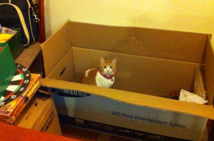 Alexa feliz en una caja para mudanza.