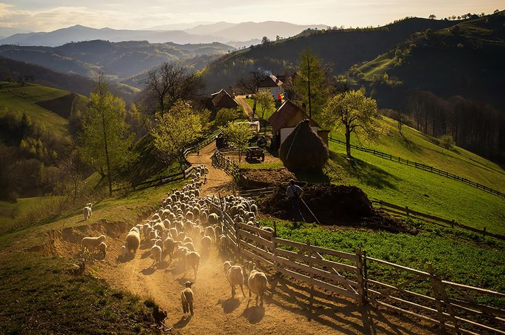 Spring Afternoon In The Hills Of Holbav Village, Romania