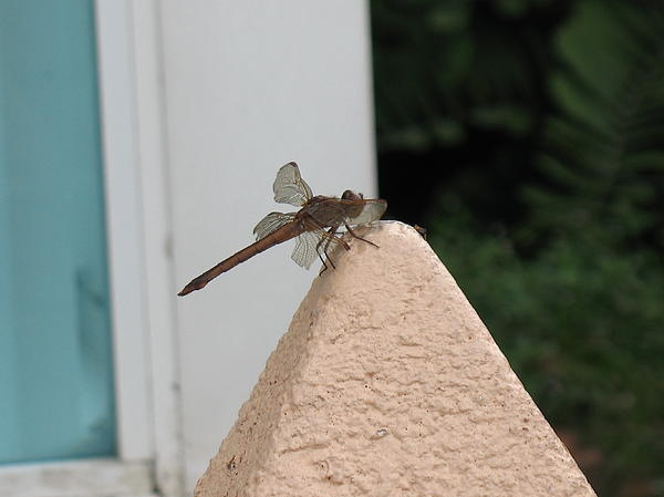 Dragonfly On A Wall