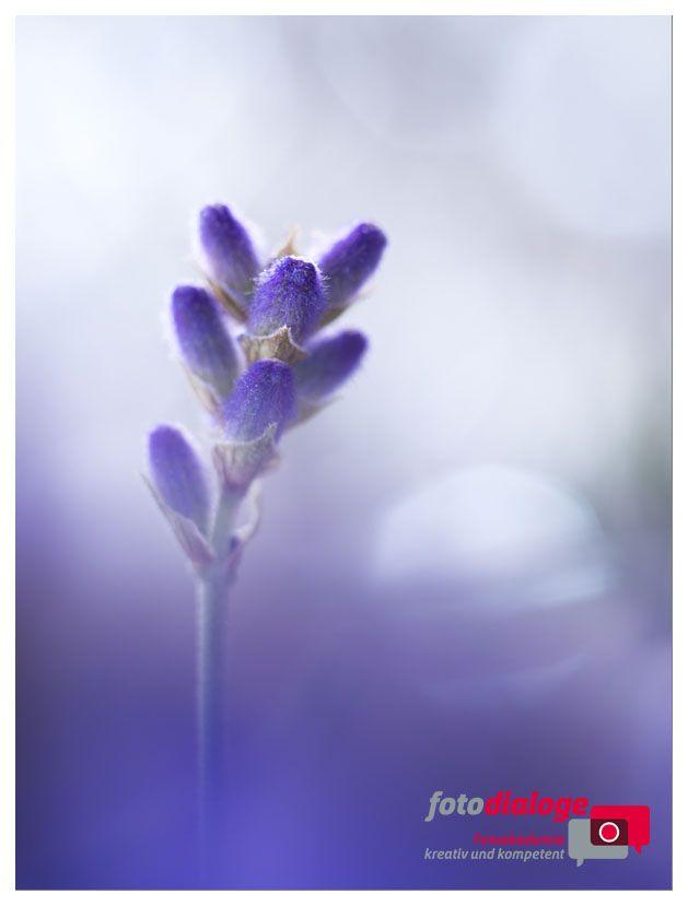 Farben die uns im tristen November verzauberten. Blütenzauber, so lautete der Titel unseres Kurses. Ein wunderbarer Kurstag mit Martina Weise in München  #Makrofotografie #Lavendel #Kurs #Fotokurs #Blütenfotografie #Fotoschule
