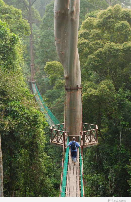 Rainforest Canopy Walkway is located in Danum Valley Conservation Area