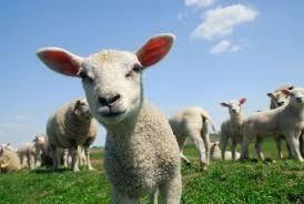 Ekologia w dzisiejszych czasach ma wielkie znaczenie wiec nie badz obojetny na jej los ! http://puszystaowca.pl/ekologiczny-wypas-owiec/