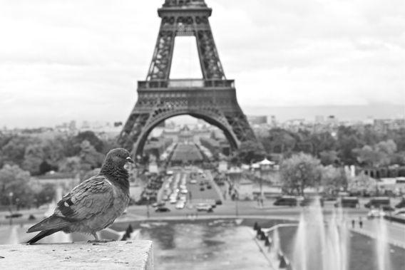 De Eiffeltoren - Paris. www.jaspervandegeinfotografie.nl