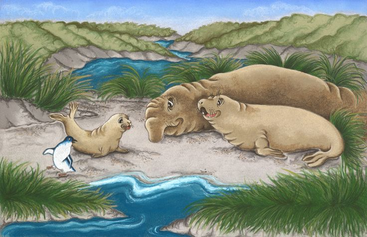 Little Blue and the Elephant Seal family. An illustration from my series of New Zealand sea life inspired art for my portfolio.  Pastel and Pastel Pencil on Canson pastel paper.