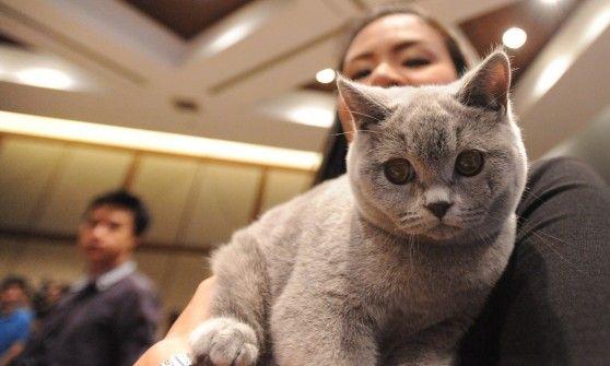 In un libro si spiega in maniera approfondita quanto Il mondo felino e quello umano siano in stretta connessione da un punto di vista naturopatico.