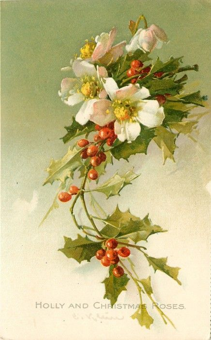 Vintage Christmas card / 1910, Holly and Christmas Roses
