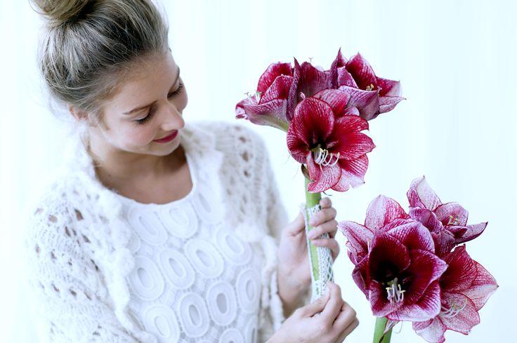 Die Amaryllis in prächtigen Farben.  #amaryllis #blumen #flowers #blumenstrauss #deko #wohnen #living  #inspiration