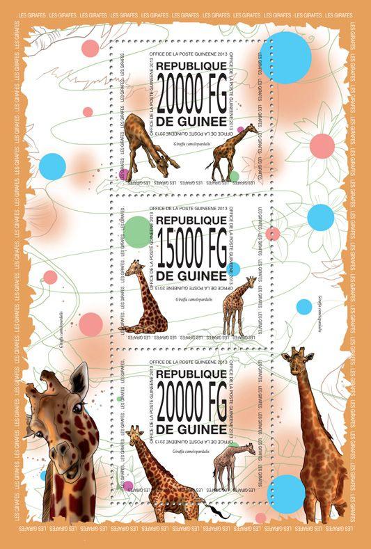 GU 13516 aGiraffes, (Giraffa camelopardalis).