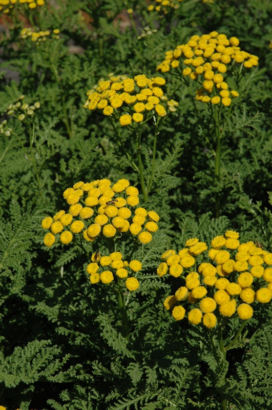 83 Best Great Garden Plants Images On Pinterest